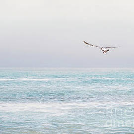 Brookings Beachfront Seagull by Michele Hancock Photography