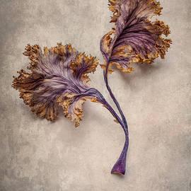 Brown and violet duet by Jaroslaw Blaminsky