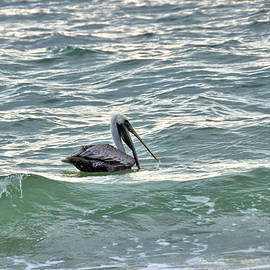 Brown Pelican In The Surf by John Trommer
