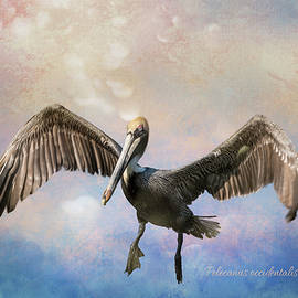 Brown Pelican Wingspan with Textures by Patti Deters