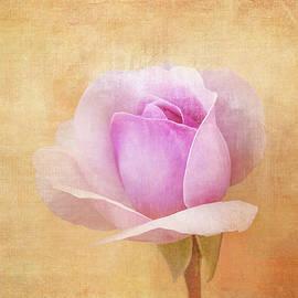 Budding Rose by Terry Davis
