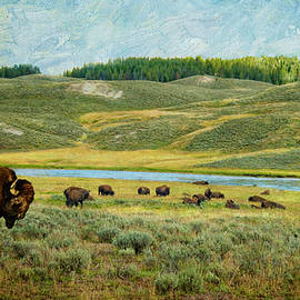 Buffalo Grazing in Yellowstone by Sandra Selle Rodriguez