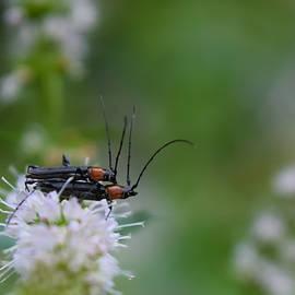 Bugs Gone Wild by Bonny Puckett