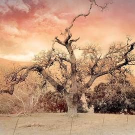 Bull Canyon Road - Series -No3 by Christina Ford