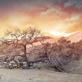 Bull Canyon Road - Series -No4 by Christina Ford