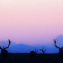 Bull Elk At Sundown by Gary Beeler