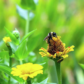 Bumble Bee by Gina Fitzhugh