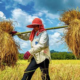 Bundles of Rice 201911249 by Lee Craker