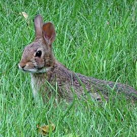 Bunny in the Grass by Lyuba Filatova