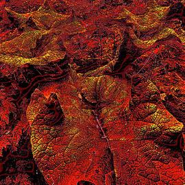 Burdock Leaf. by Andy i Za