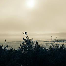 Burning off the Fog Split Tone by Linda MacFarland