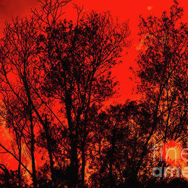 Burning trees by Chris Bee Photography