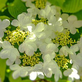 Bursting Bloom ... by Judy Foote-Belleci