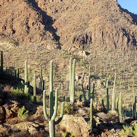Bushmaster Peak Saguaros by Douglas Taylor