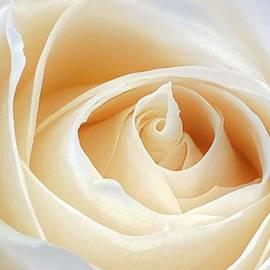 Butter Cream by Shari Stamford Krause