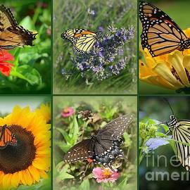Butterflies and Summer Blossoms - A Collage by Dora Sofia Caputo