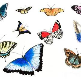 Butterflies of Costa Rica by Graham Wallwork