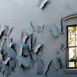 Butterflies of Fernandina by Norman Johnson