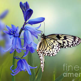 Butterfly and Bluebell Dreams by Morag Bates