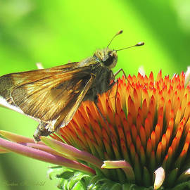 Butterfly and Echinacea Blossom - Flower and Flying Insect - Flora and Wildlife - Macro Photography by Brooks Garten Hauschild