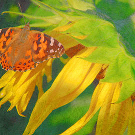 Butterfly and Sunflower by Dianne Sherrill