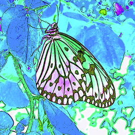 Butterfly Becky