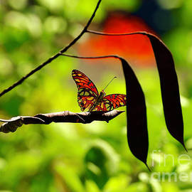 Butterfly by Craig Wood