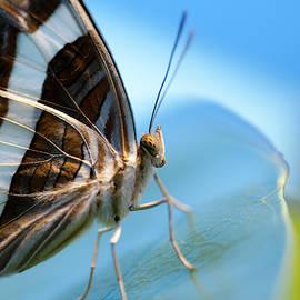 Butterfly in a blue world by Lieve Snellings