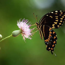 Butterfly Kisses by Holton Media