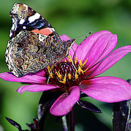 Butterfly Macro On A Flower by John Hughes