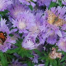 Butterfly, Moth and Blooms by Amy Scheer
