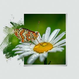 Butterfly on a daisy by Igor Klyakhin