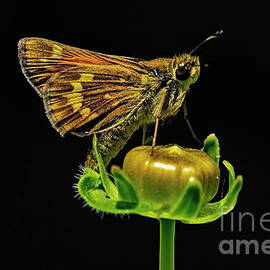 Butterfly on a Flower Bud #1 by William Meeuwsen