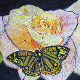 Butterfly on a Rose by Ali Baucom