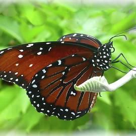 Butterfly on Bud by Barbie Corbett-Newmin