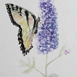 Butterfly on Lavender by Kelly J Kreger