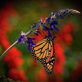 Butterfly on Purple Flower by Carolyn Hutchins
