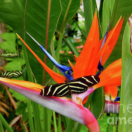 Butterfly Paradise by Sean Griffin