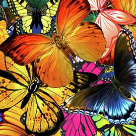 Butterfly Party Jamboree Monarch Swallowtails  by Movie Poster Prints