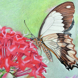 Butterfly - Symbol Of Resurrection by Paramjeet Kaur