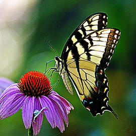 Butterfly Visit by Bob Welch