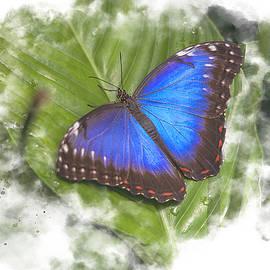 Butterfly Watercolor by Darren Wilkes