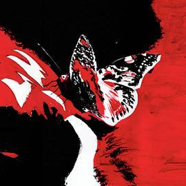 Butterfly1 by Anil Nene