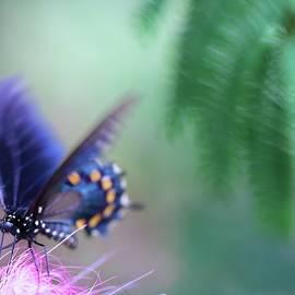 Butterfly's Delightful Descent by Kelly J Kreger