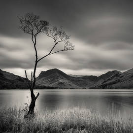 Buttermere Tree by Dave Bowman
