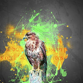Buzzard Colour Splash by Darren Wilkes