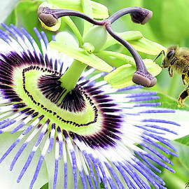 Buzzing around 01 by Kevin Chippindall