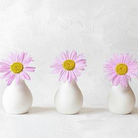 BV05 - Pink Daisies in Bud Vases  by Patti Deters