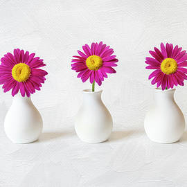 BV07 - Hot Pink Daisy Trio by Patti Deters