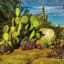 Cacti and rock by Jon Burch Photography